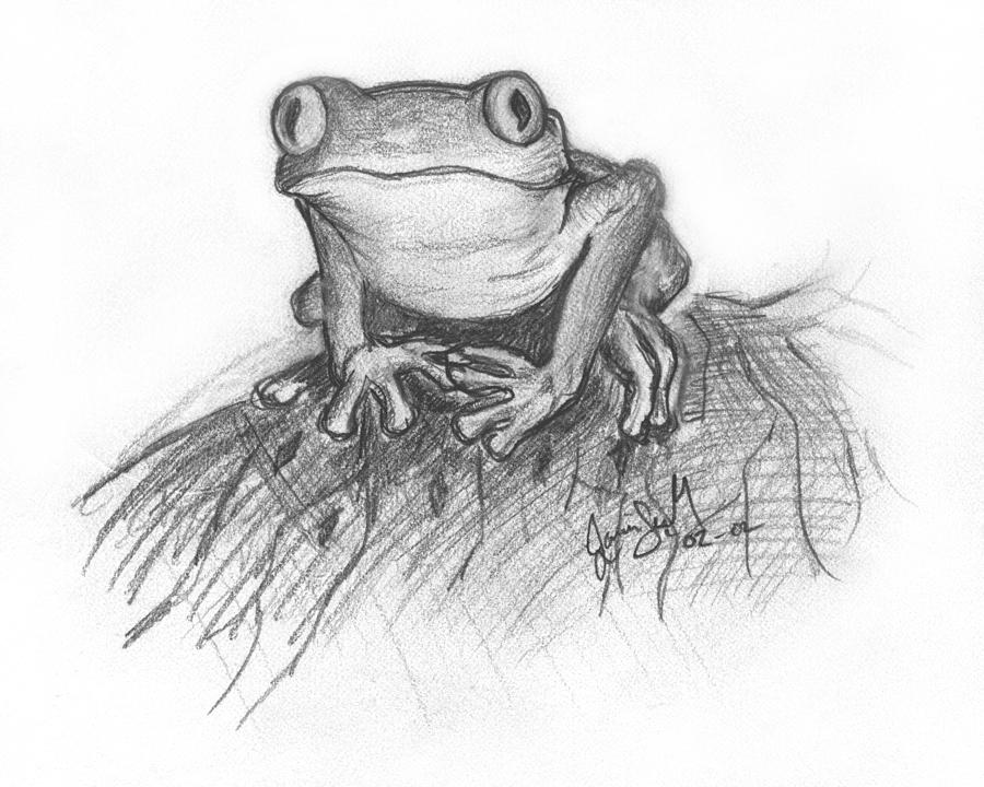 drawing frogs tree frog drawing by bob manthey frogs drawing