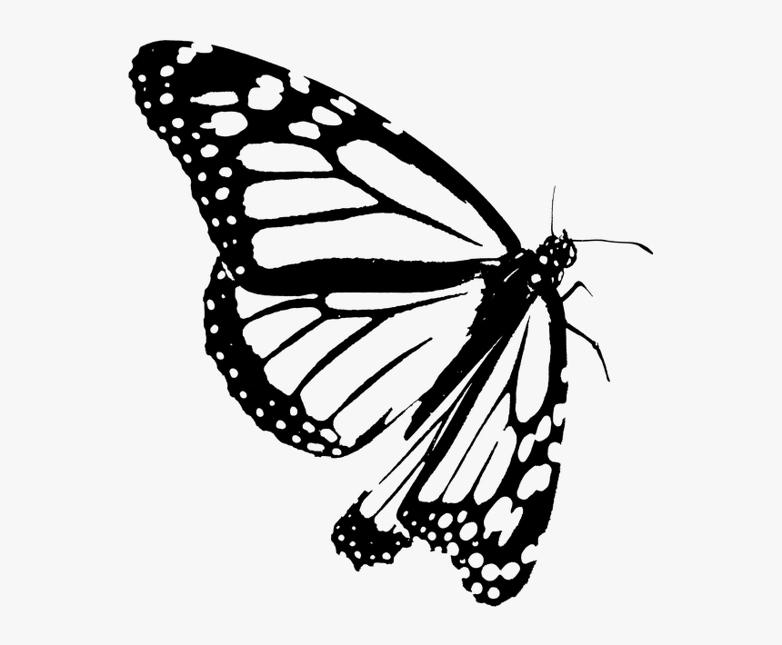 drawing monarch butterfly 67 best pyrography and patterns images on pinterest monarch drawing butterfly