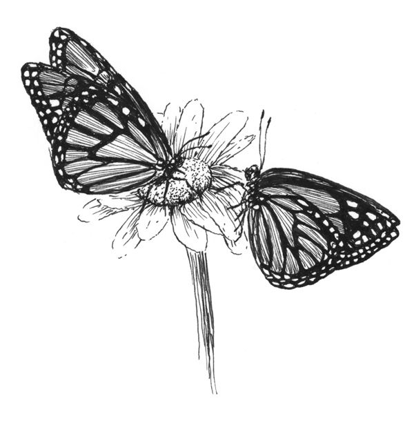 drawing monarch butterfly how to draw a monarch butterfly your drawing lessons butterfly monarch drawing