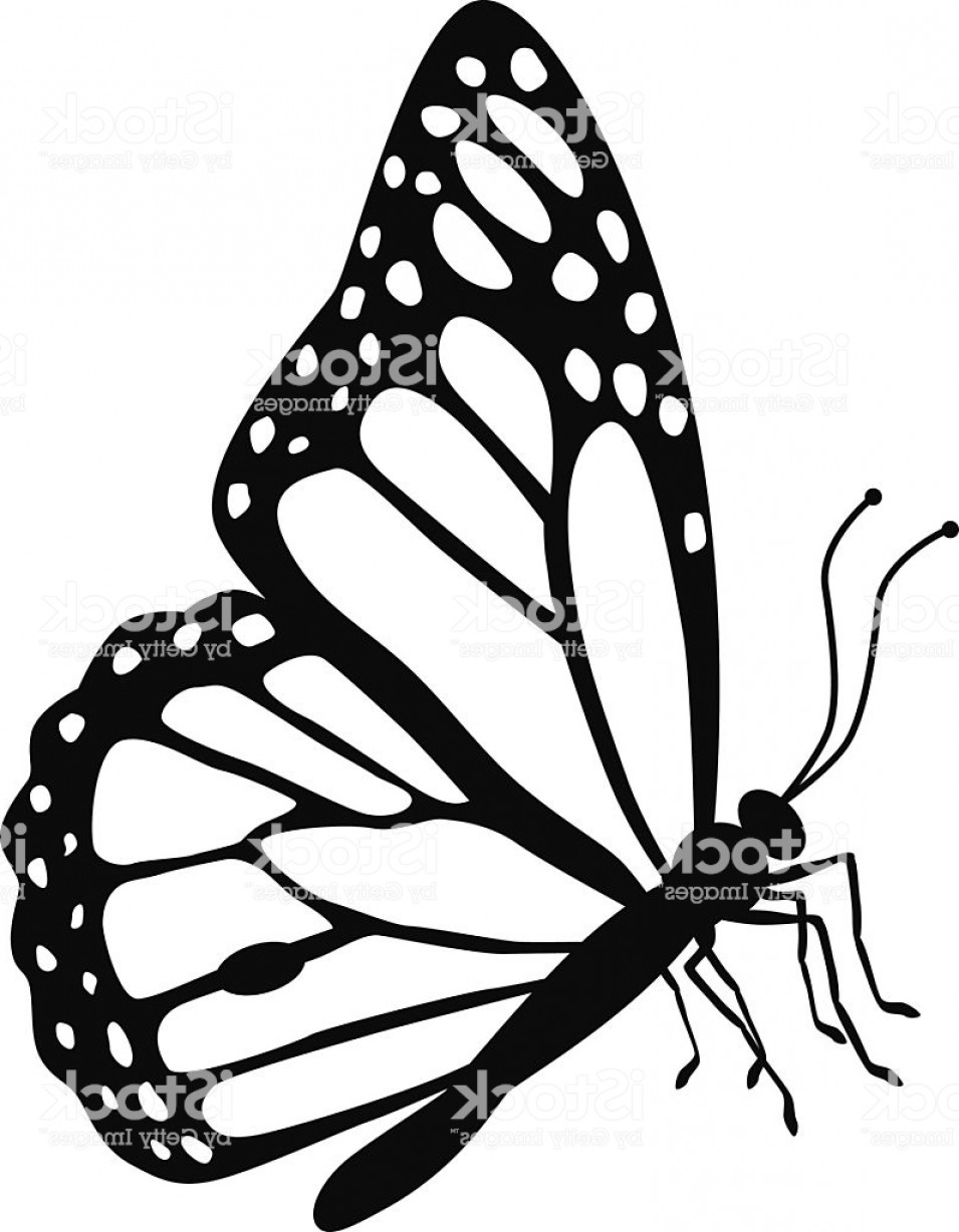 drawing monarch butterfly how to draw animals butterflies their anatomy and wing butterfly drawing monarch