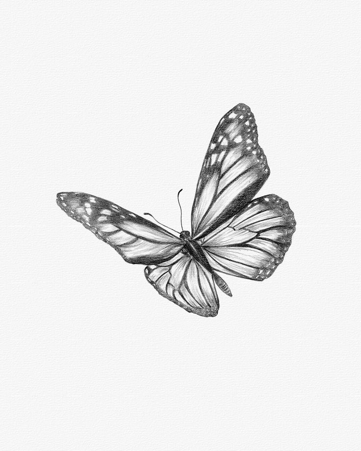 drawing monarch butterfly learn how to draw a monarch butterfly in five easy steps monarch butterfly drawing