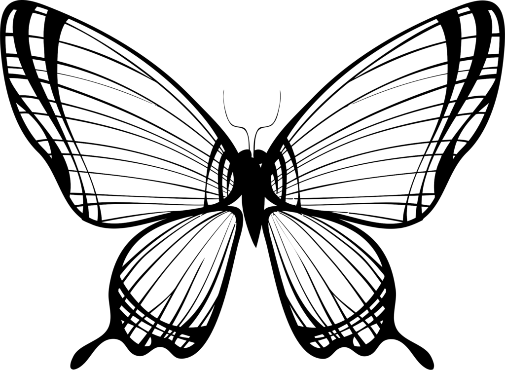 drawing monarch butterfly monarch butterfly clipart black white outline monarch drawing butterfly