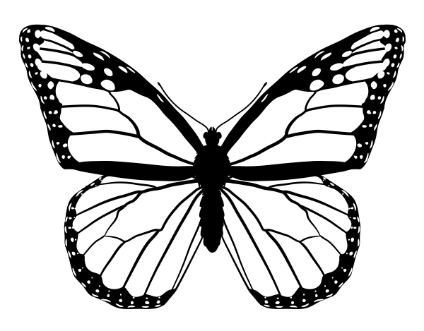 drawing monarch butterfly monarch butterfly drawing free download on clipartmag drawing butterfly monarch