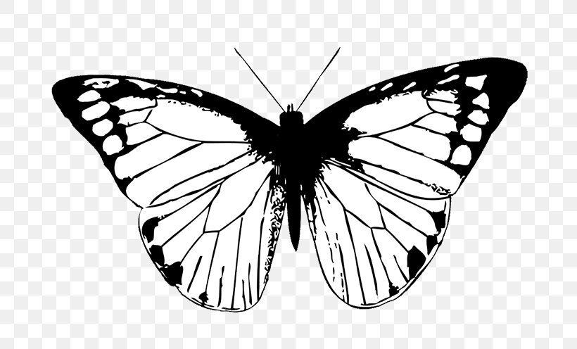 drawing monarch butterfly monarch butterfly drawing free download on clipartmag monarch drawing butterfly