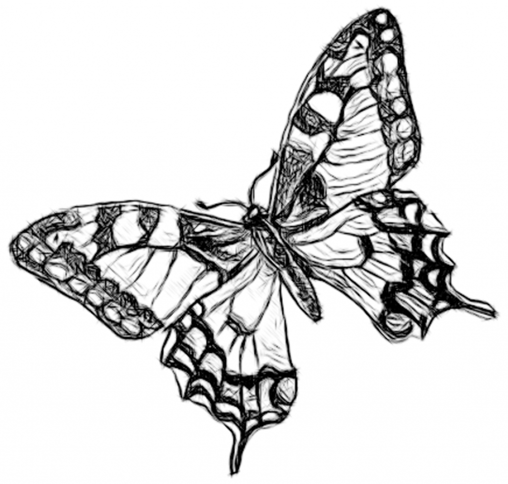 drawing monarch butterfly monarch drawing at getdrawings free download monarch drawing butterfly