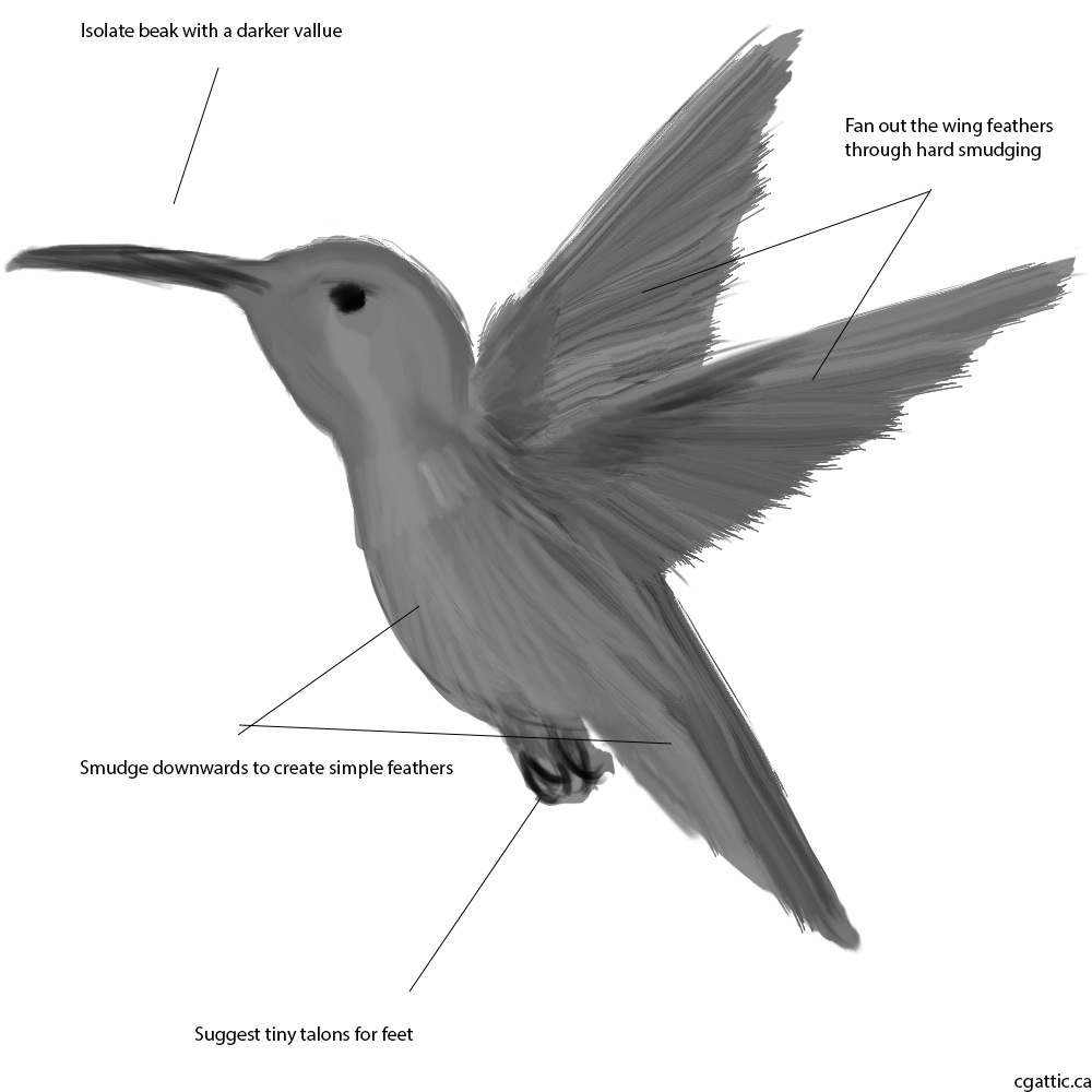 drawing of a hummingbird hummingbird i drew with pencil accidentally outside of drawing a of hummingbird