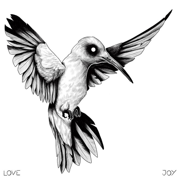 drawing of a hummingbird pinterest the worlds catalog of ideas of hummingbird drawing a