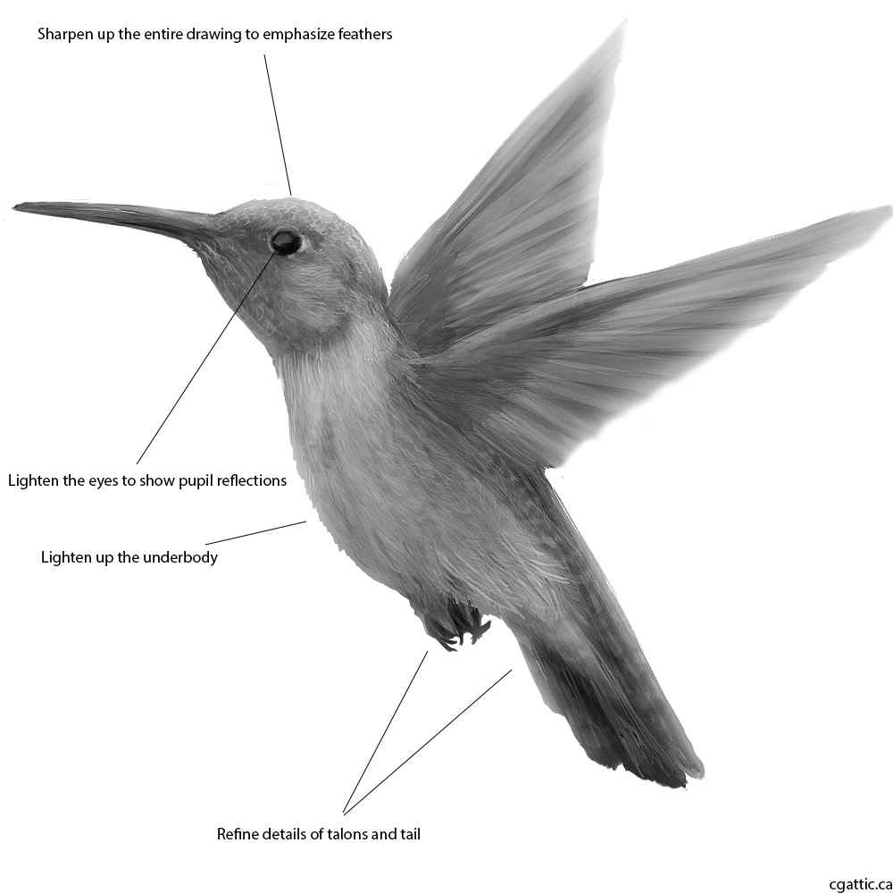 drawing of a hummingbird the gallery for gt hummingbird sketches a of hummingbird drawing