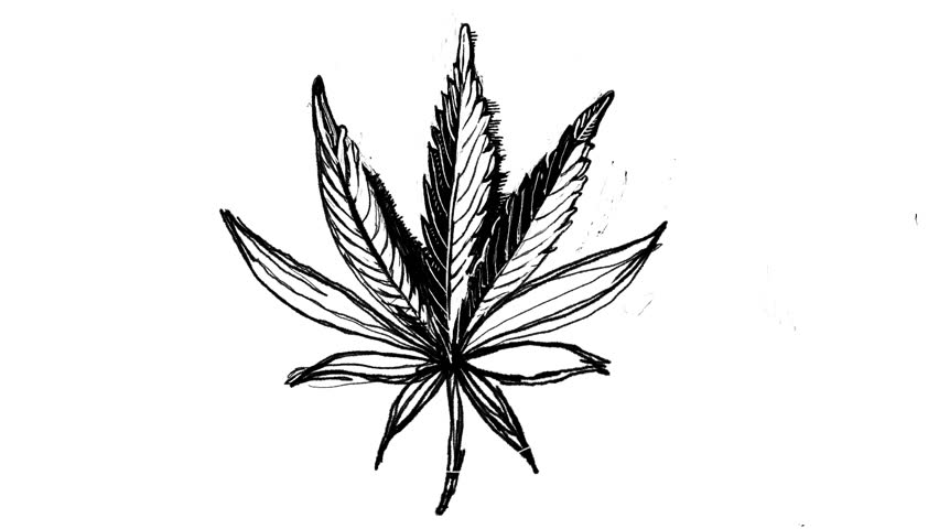 drawing of pot leaf weed leaf drawing tumblr at getdrawings free download of pot drawing leaf
