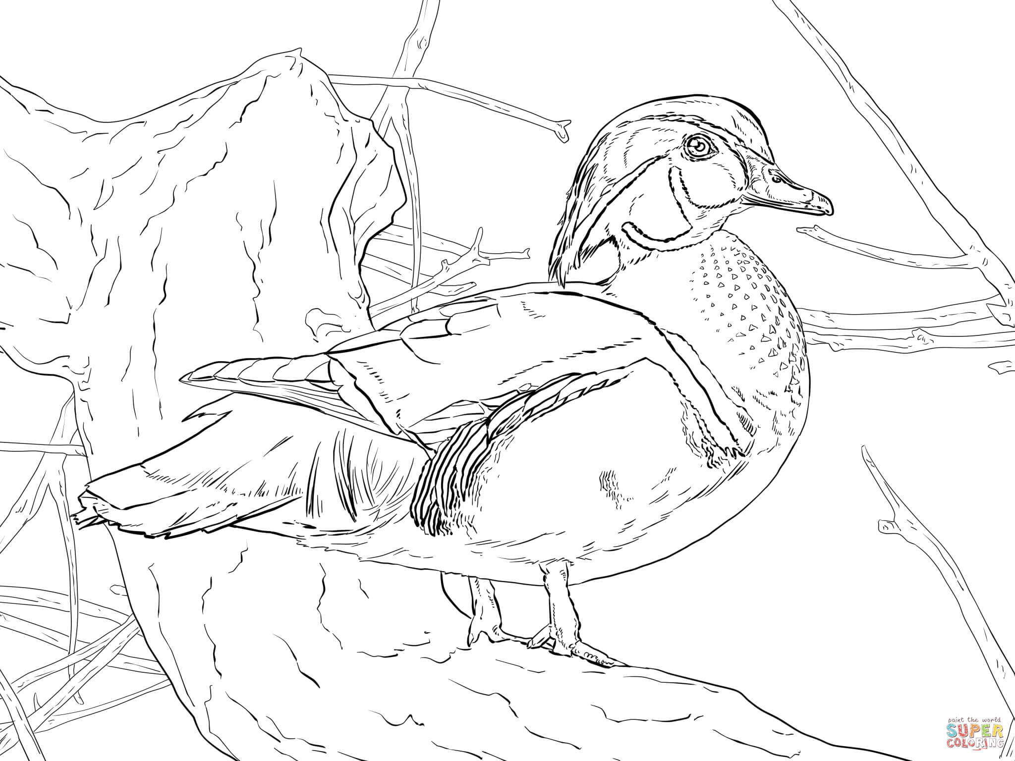 duck duck goose coloring pages daffy duck on vacation to sno village coloring pages netart duck coloring goose pages duck