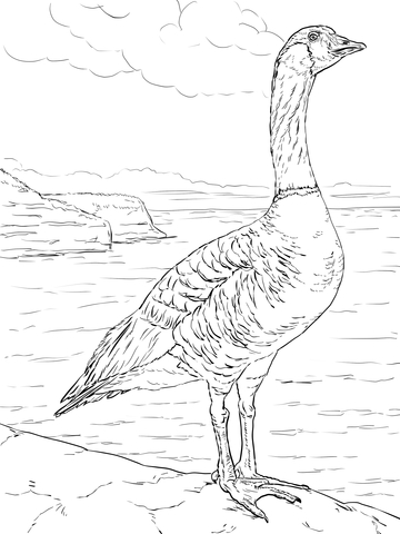 duck duck goose coloring pages flying geese coloring pages at getcoloringscom free duck coloring duck pages goose
