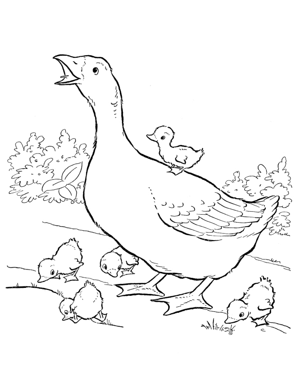 duck duck goose coloring pages mother of duck and her babies coloring page netart goose coloring duck duck pages