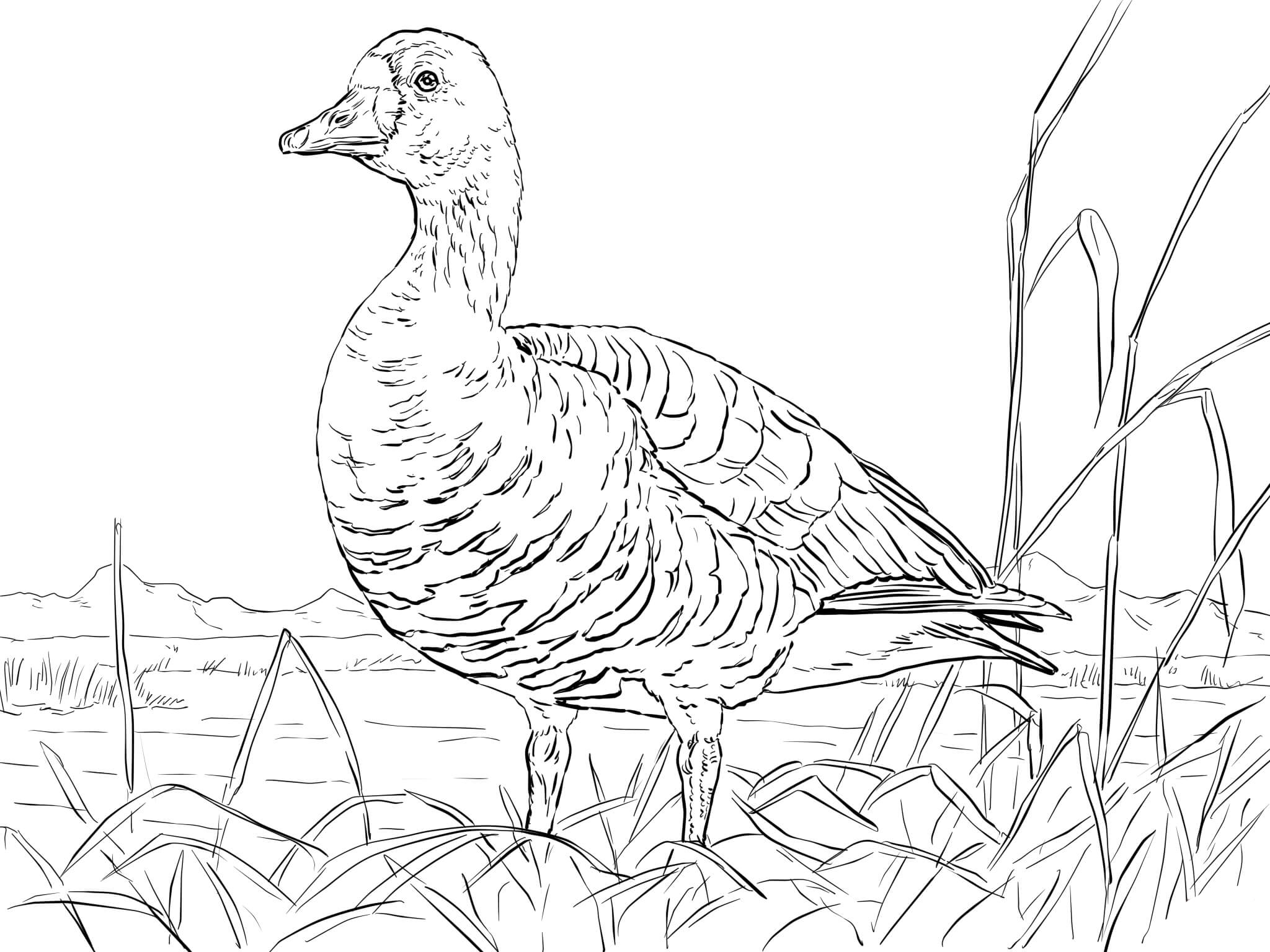 duck duck goose coloring pages two geese coloring page free printable coloring pages duck duck coloring pages goose