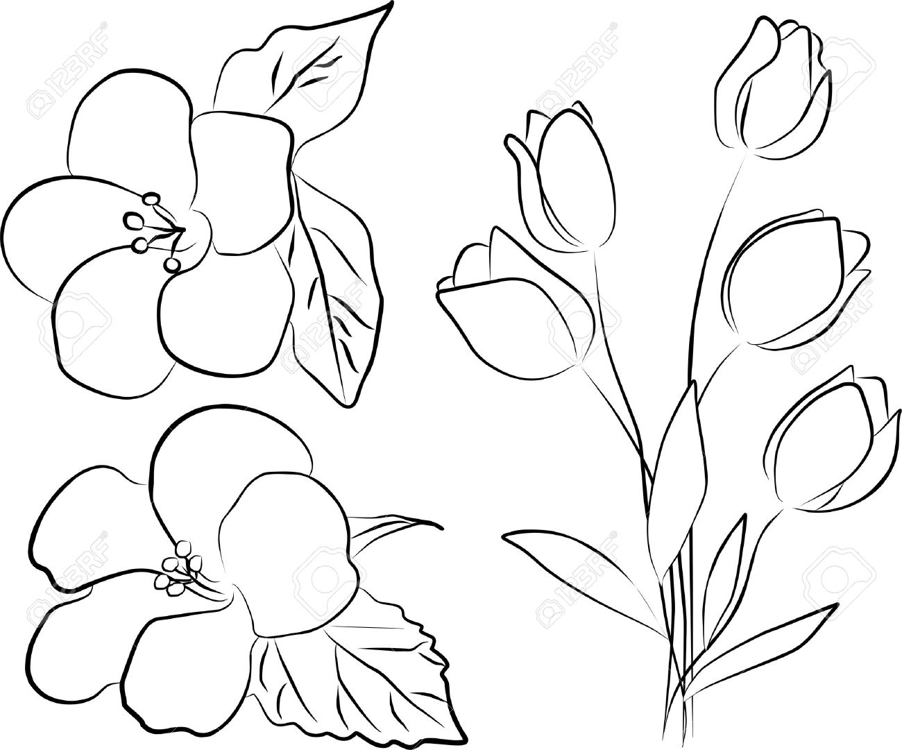 easy tulip drawing a simple drawing of parrot tulip coloring page tulip tulip easy drawing