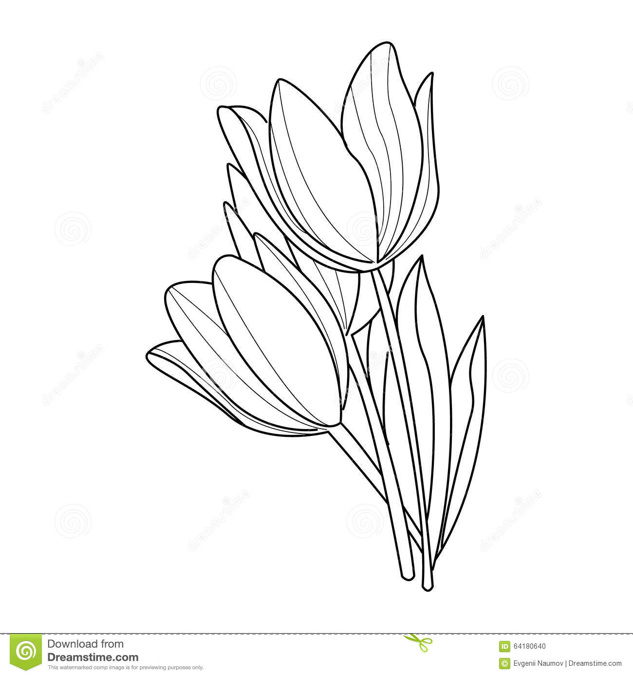 easy tulip drawing easy tulip drawing drawing easy tulip
