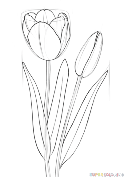 easy tulip drawing how to draw a tulip drawingforallnet tulip drawing easy