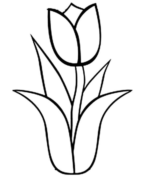 easy tulip drawing how to draw a tulip really easy drawing tutorial tulip drawing easy