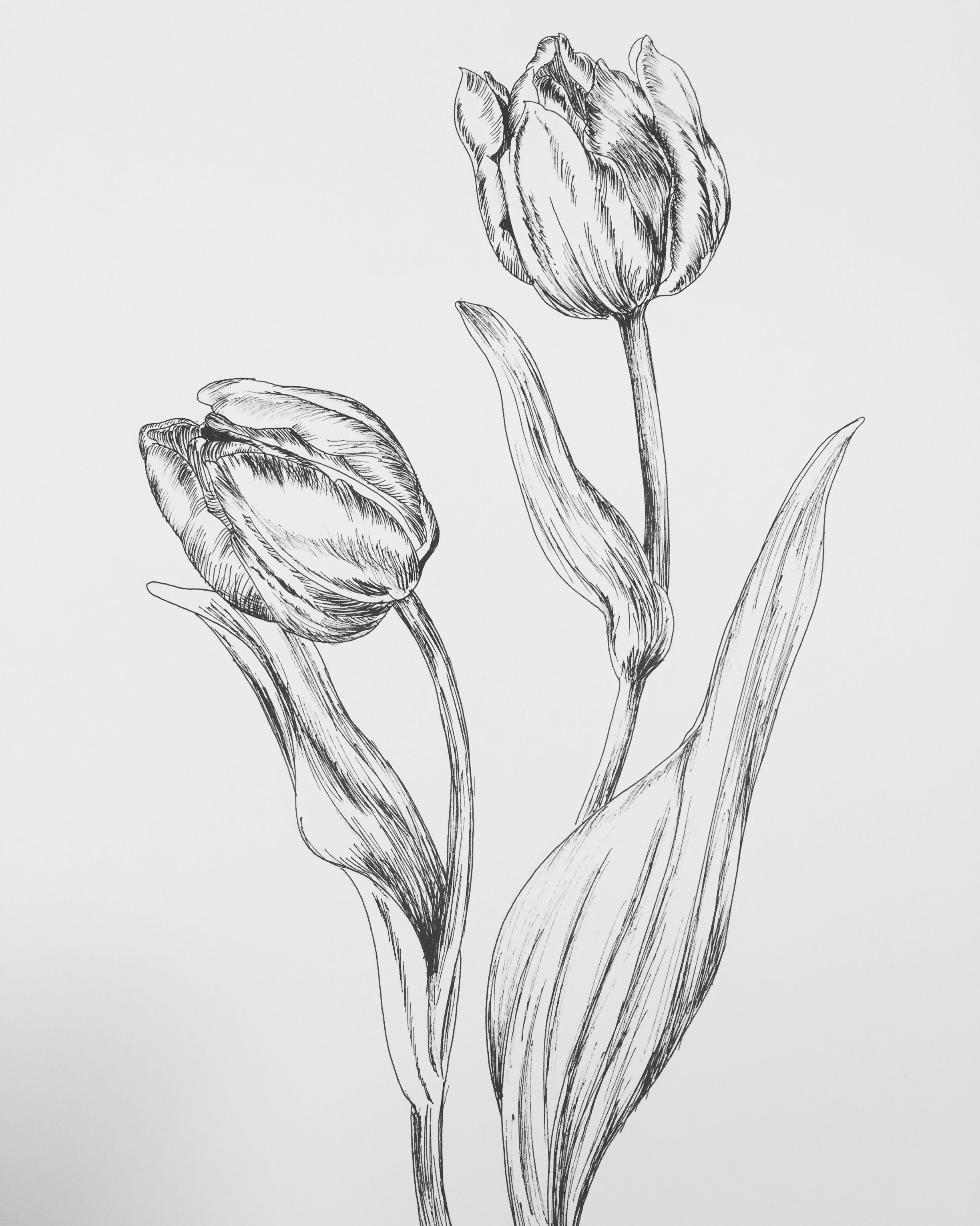 easy tulip drawing how to draw a tulip step by step drawing tutorials easy tulip drawing