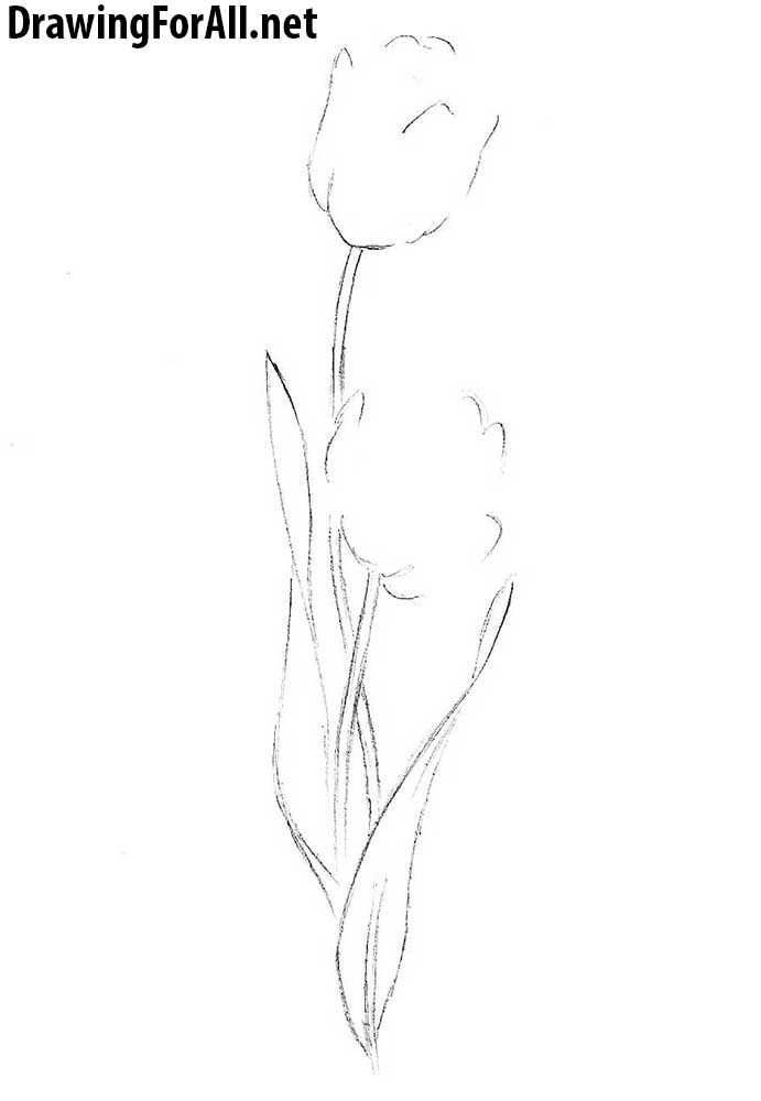 easy tulip drawing open rose drawing step by step at getdrawings free download easy tulip drawing