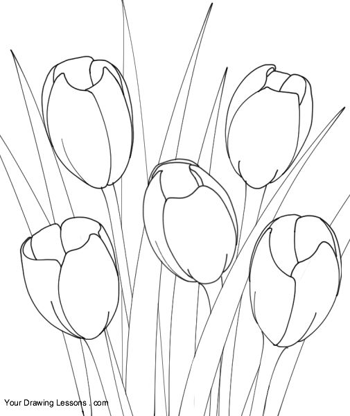 easy tulip drawing tulip drawing free download on clipartmag easy drawing tulip