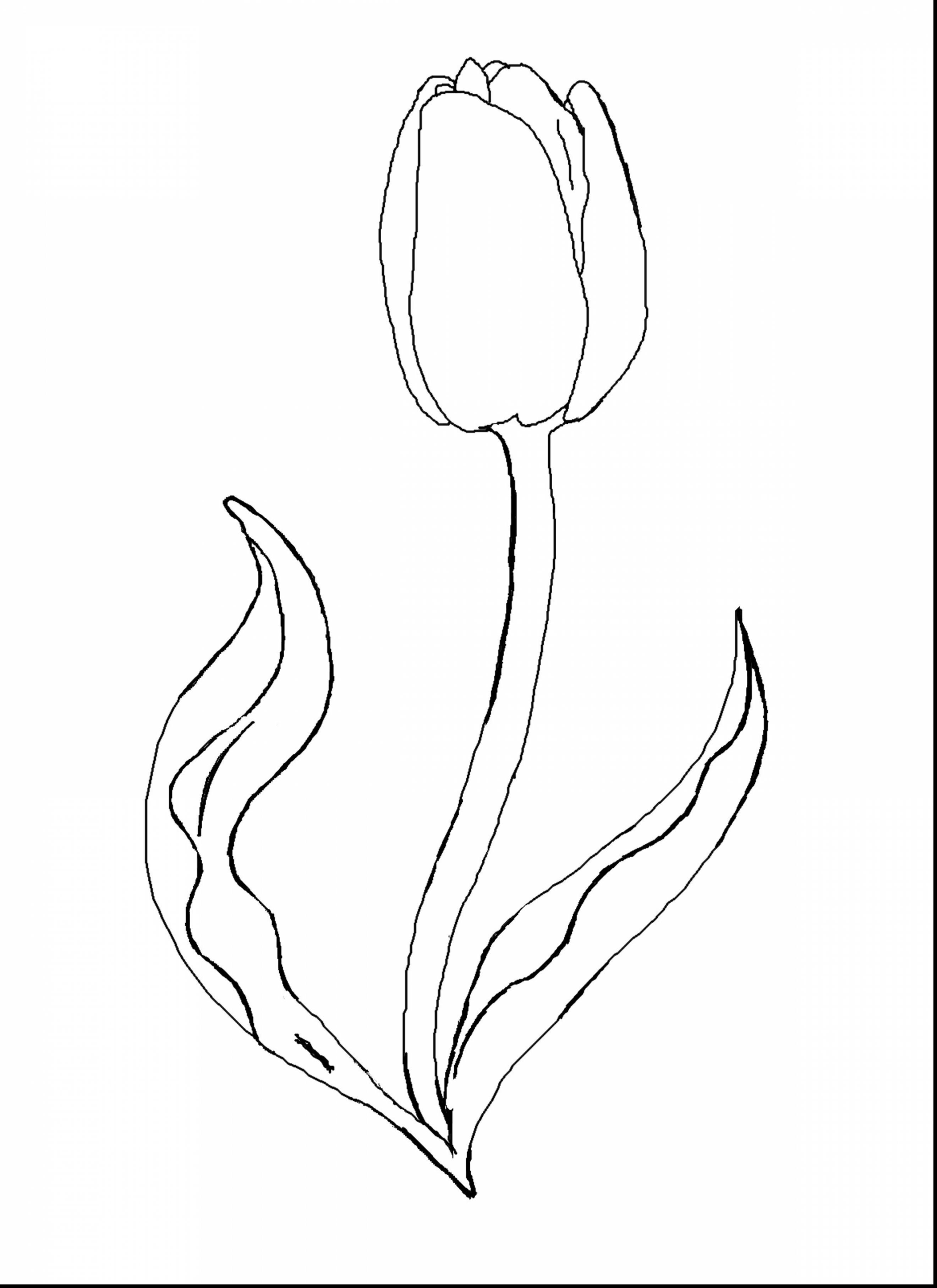 easy tulip drawing tulip drawing how to draw spring tulips step by step tulip easy drawing