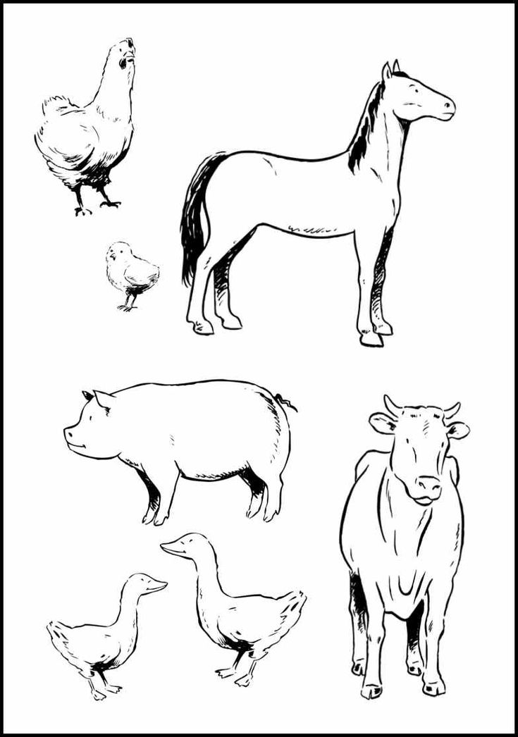 farm animals for coloring free printable farm animal coloring pages for kids farm animals coloring for