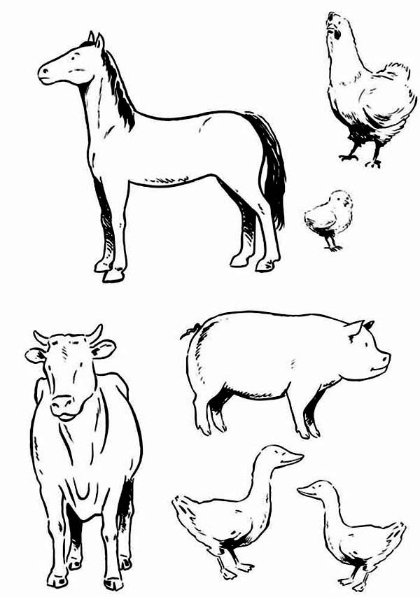 farm animals for coloring printable coloring pages barn with animals coloring home for farm coloring animals