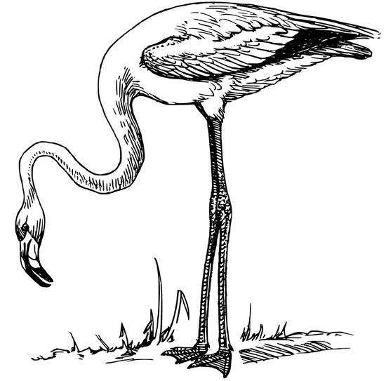 flamingo coloring page flamingos coloring pages to kids page coloring flamingo 1 1