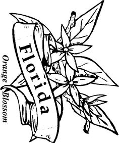 florida state flower florida coloring page crayolacom state florida flower
