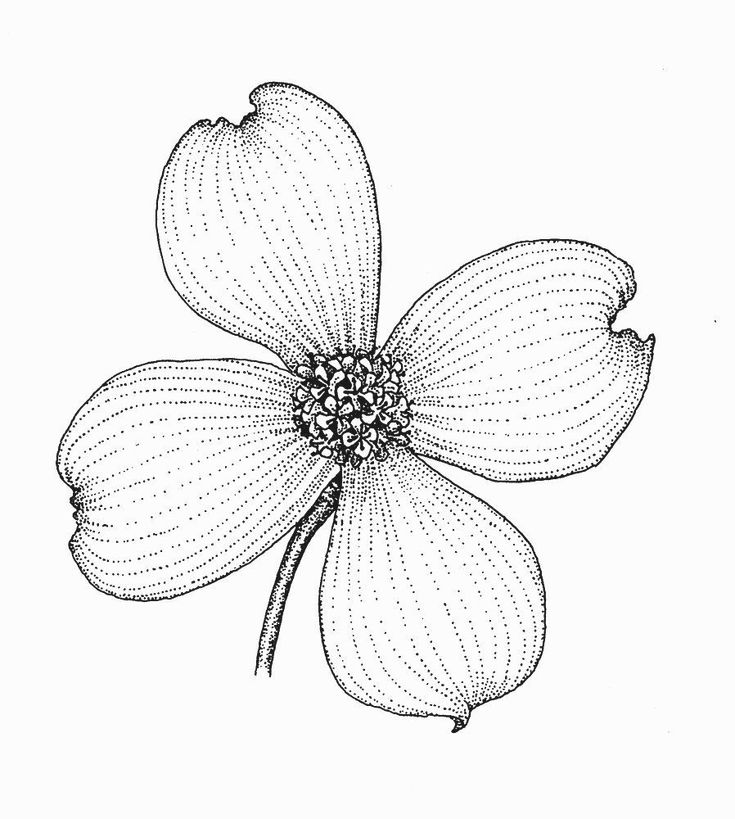 florida state flower florida flag coloring page awesome mississippi state state florida flower