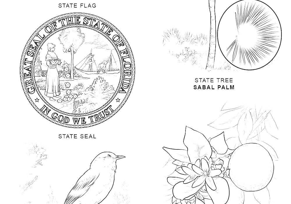 florida state flower florida state flower coloring page flower coloring pages flower florida state