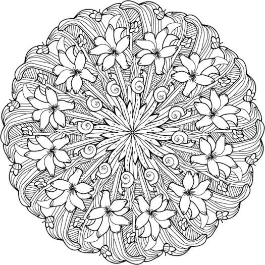 florida state flower florida state seal coloring page free printable coloring florida state flower