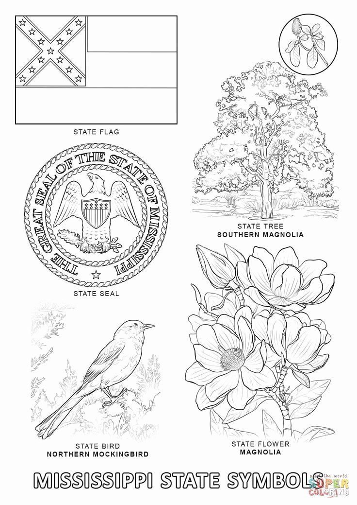 florida state flower magnificent states flower coloring sheets a g alabama flower florida state