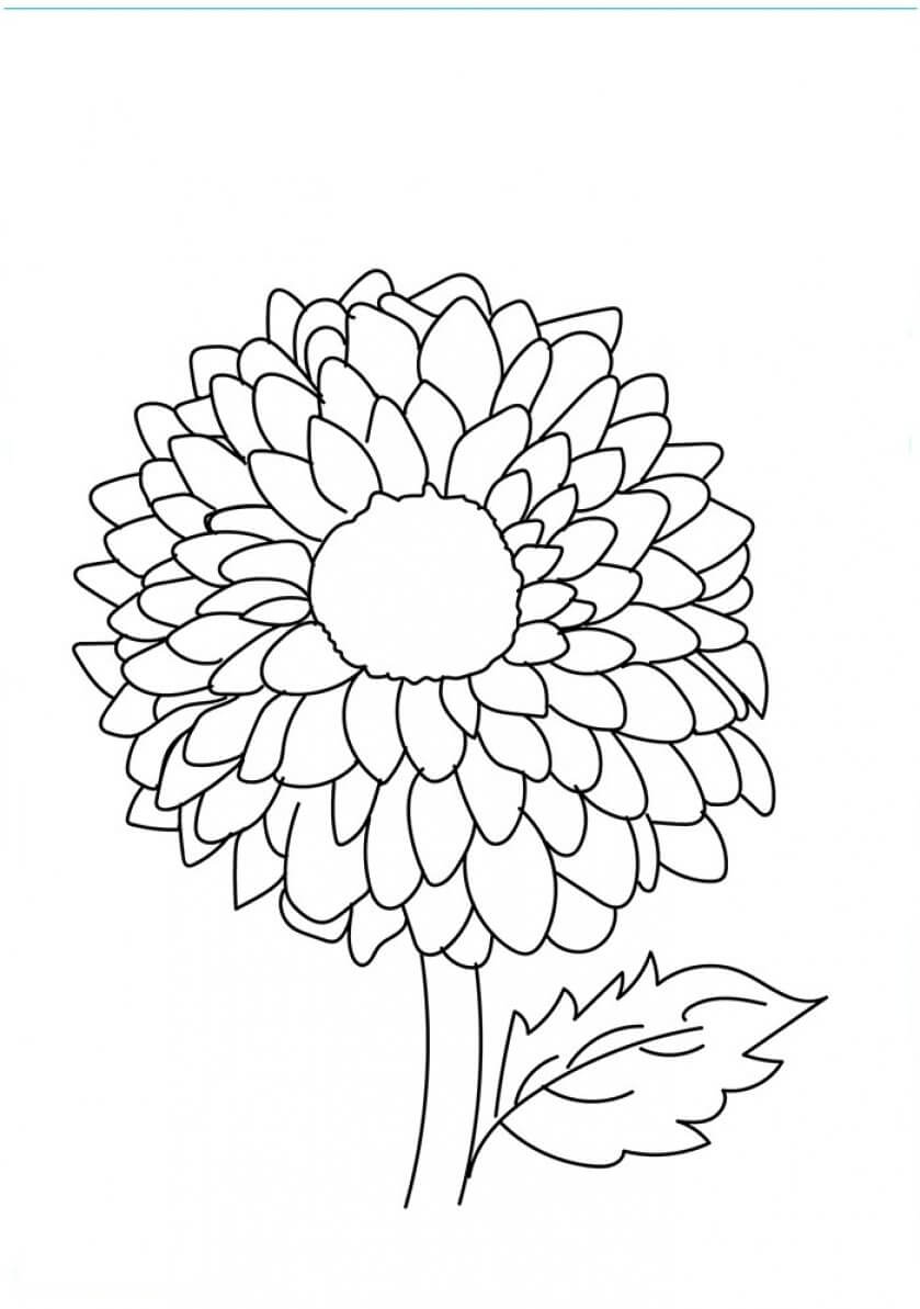flowers to color and print daisy scout flower coloring pages cute printable print to and color flowers