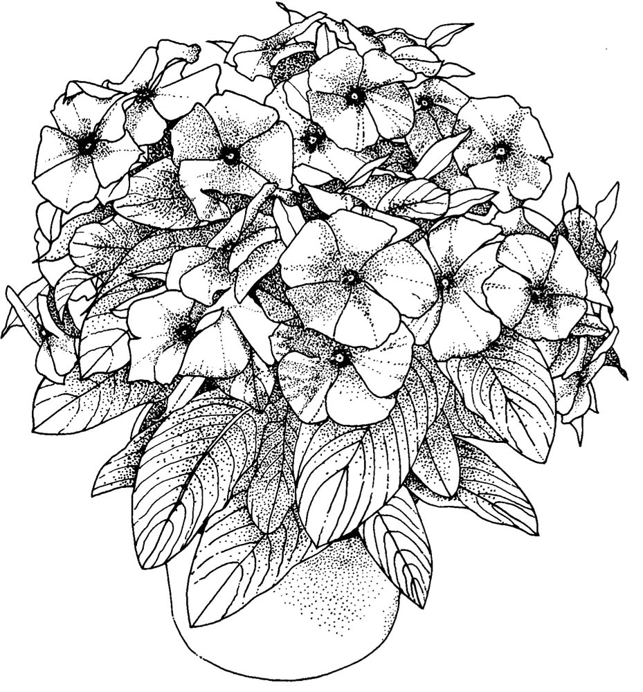 flowers to color and print detailed flower coloring pages to download and print for free color print and to flowers