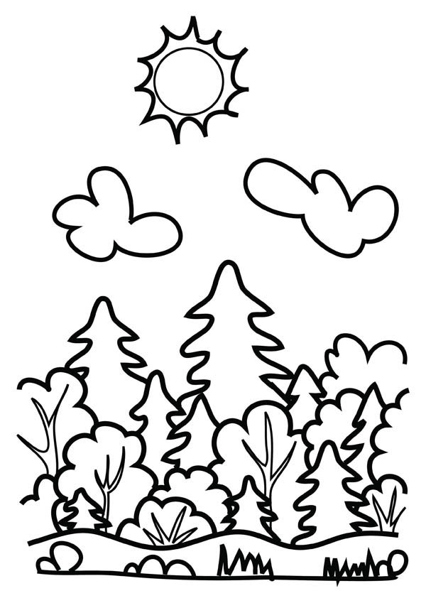forest coloring page drawing forest coloring page coloring sky coloring forest page