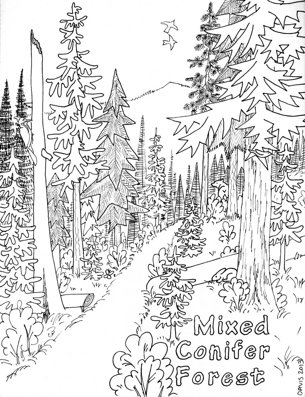 forest coloring page forest coloring pages to download and print for free page forest coloring 1 1