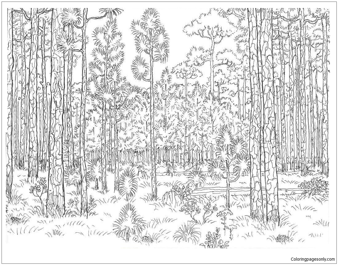forest coloring page old forest coloring pages nature seasons coloring coloring page forest