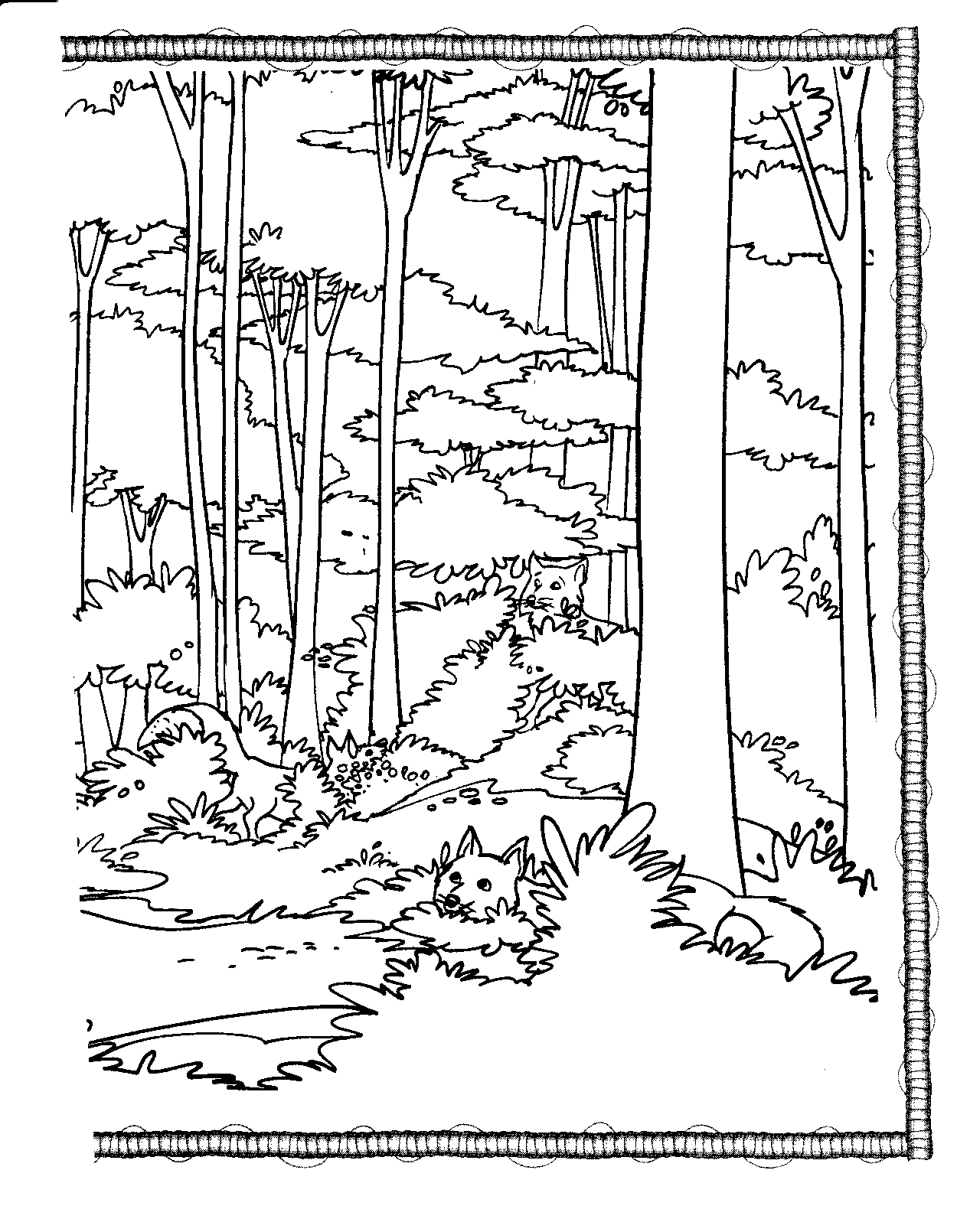 forest coloring page rainforest coloring pages endangered species coloring coloring page forest