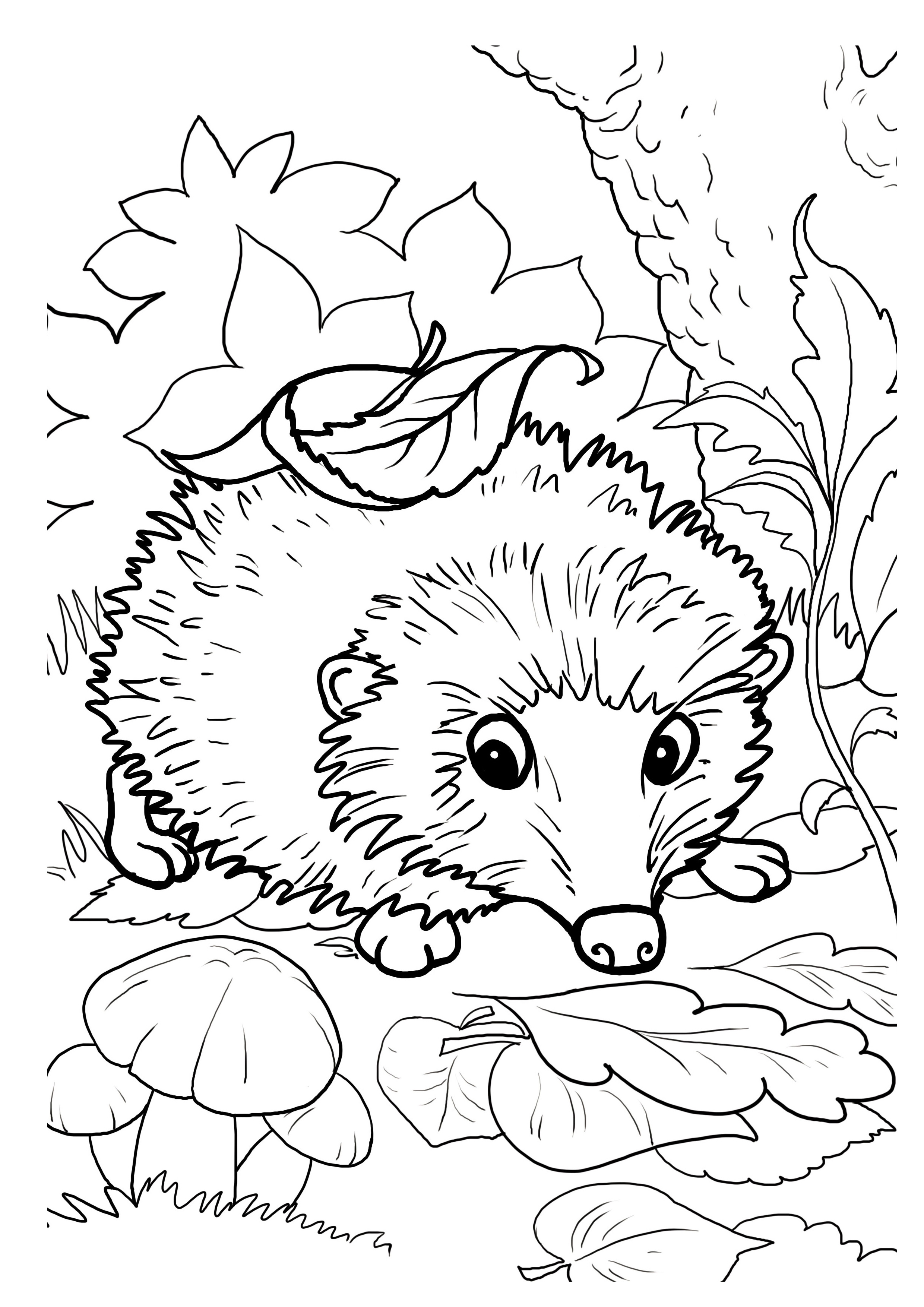 free hedgehog coloring pages hedgehogs free printable coloring and activity page for coloring free hedgehog pages