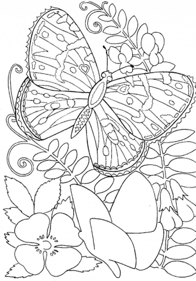 free printable pictures to color get this butterfly coloring pages to print for adults 90037 free printable color to pictures