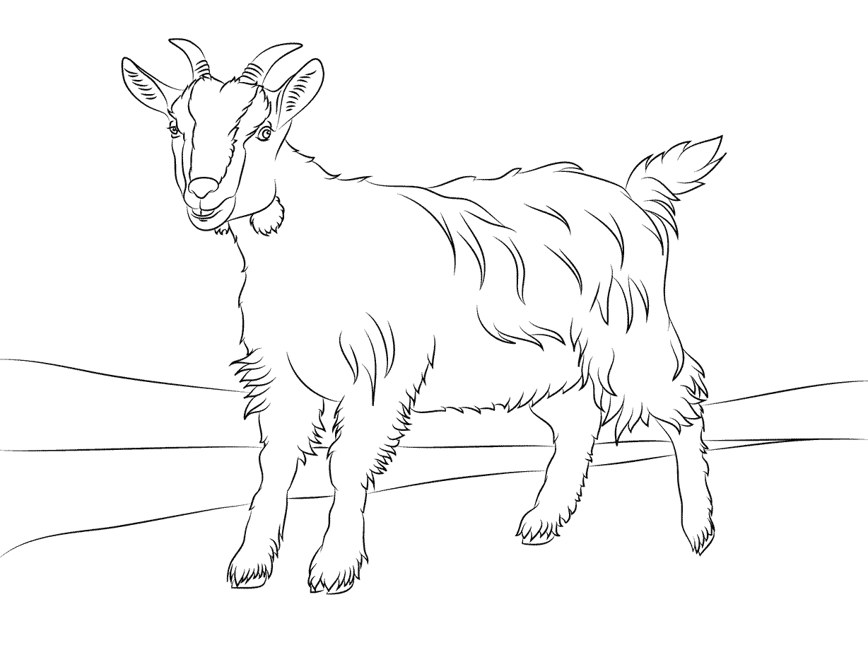 goat picture for colouring printable goat coloring pages for kids for picture goat colouring