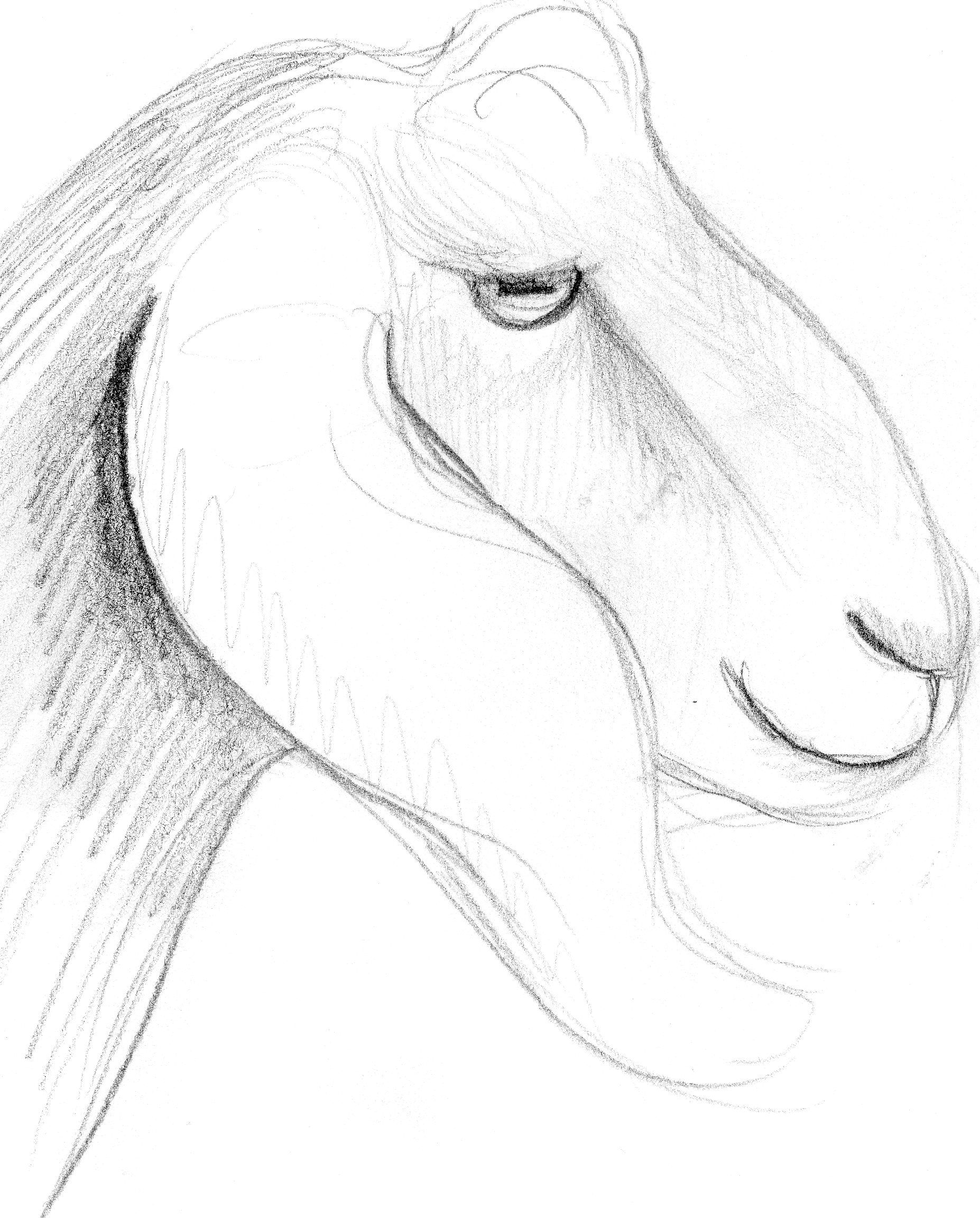 goat sketch goat drawing images at getdrawings free download goat sketch