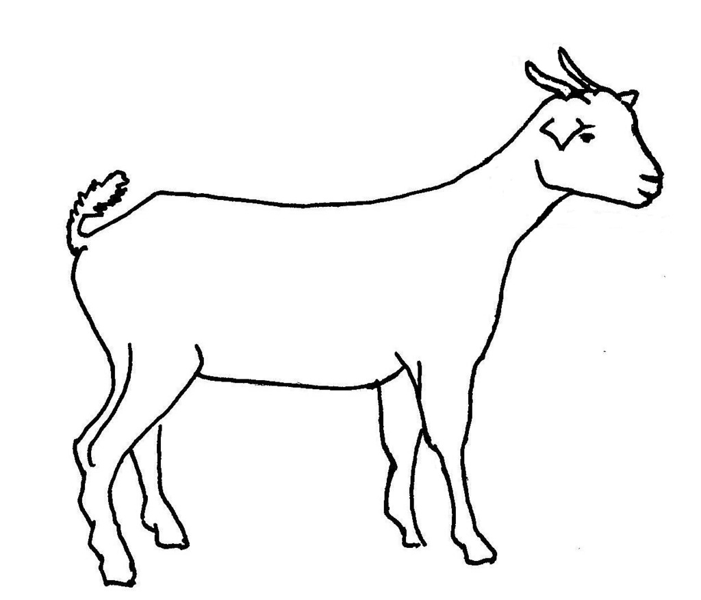 goat sketch how to draw a goat for beginners drawingforallnet sketch goat