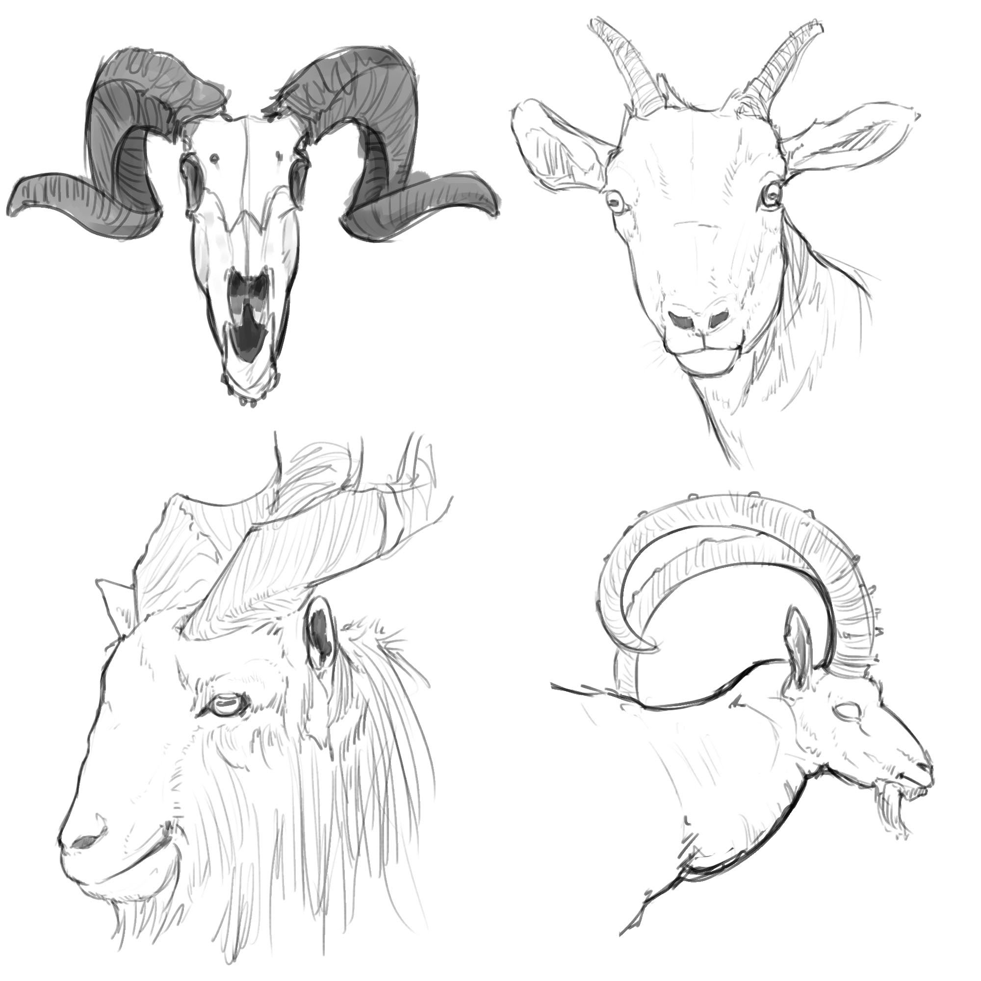 goat sketch how to draw a goat step by step farm animals animals goat sketch