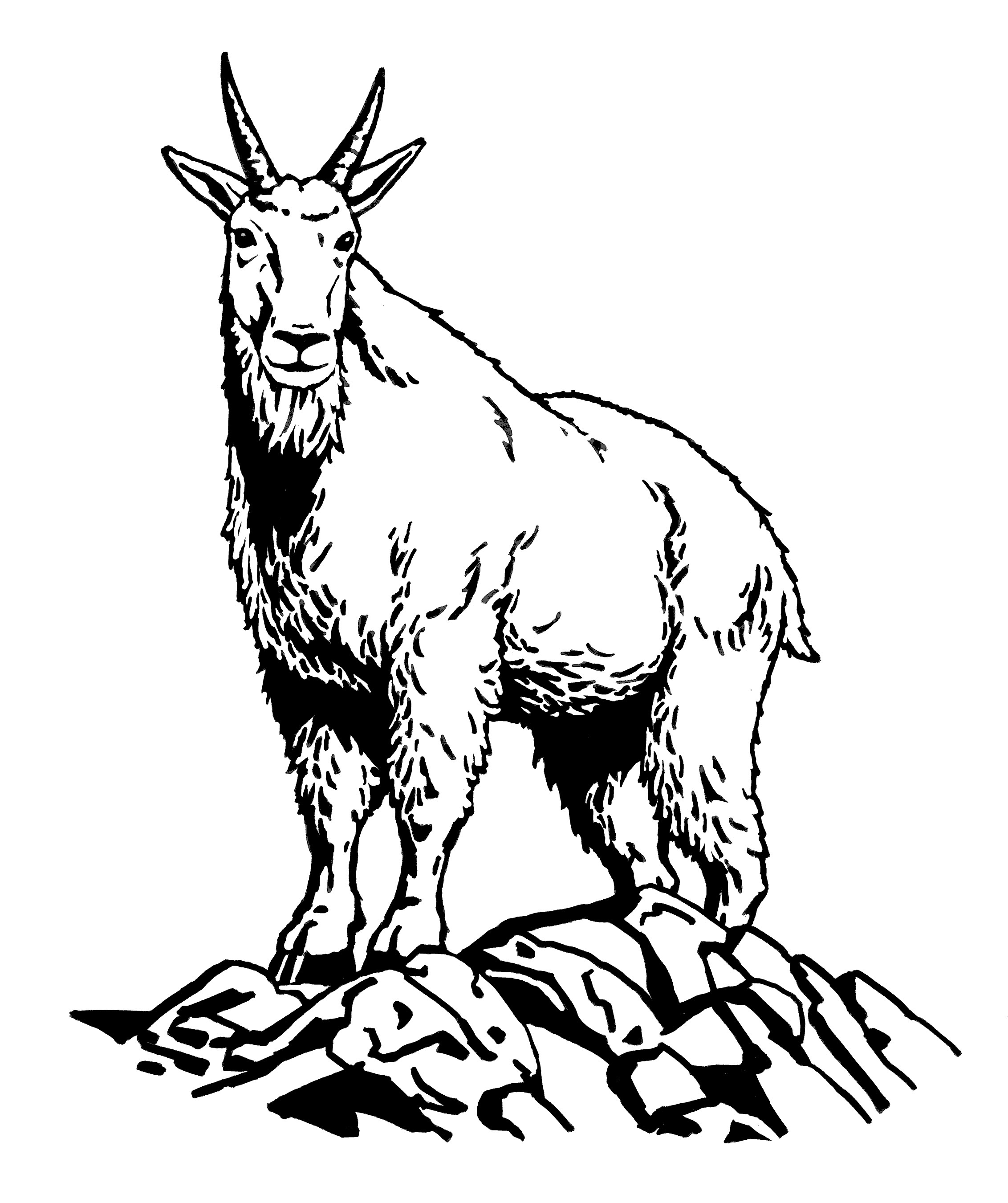 goat sketch how to draw a goat step by step guide sketch goat