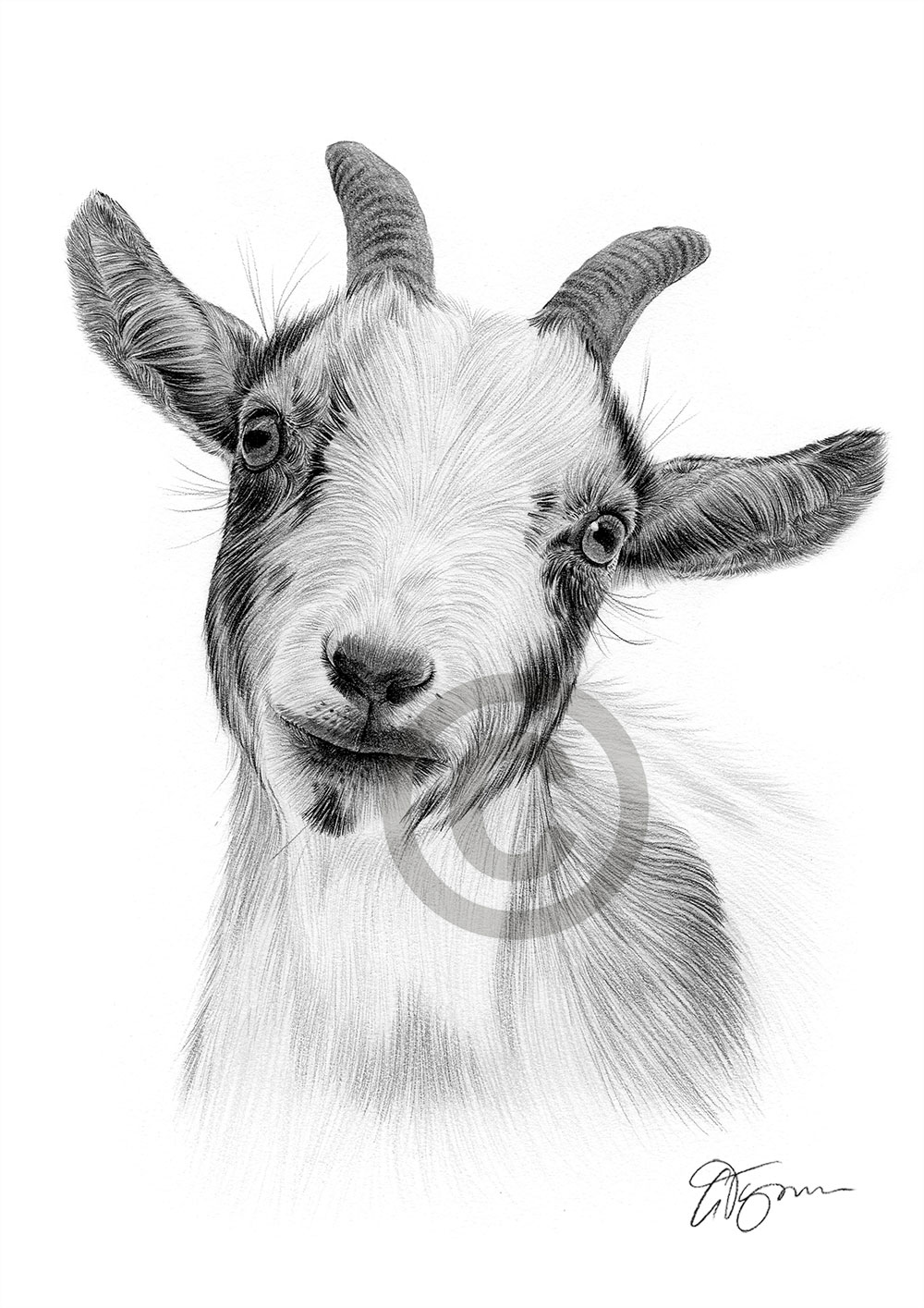 goat sketch nubian goat drawing free download on clipartmag sketch goat