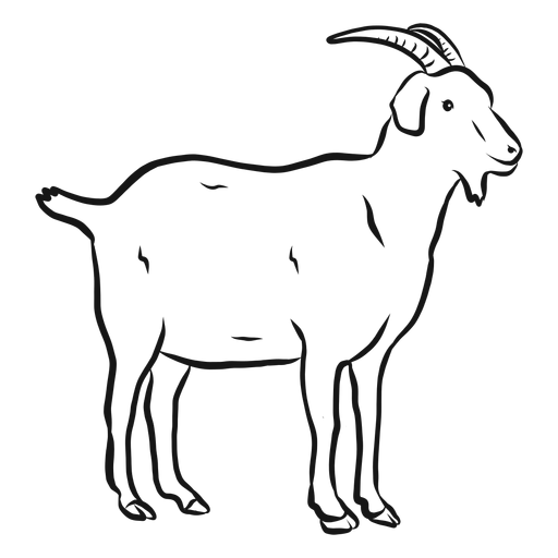 goat sketch the best free mountain goat drawing images download from goat sketch