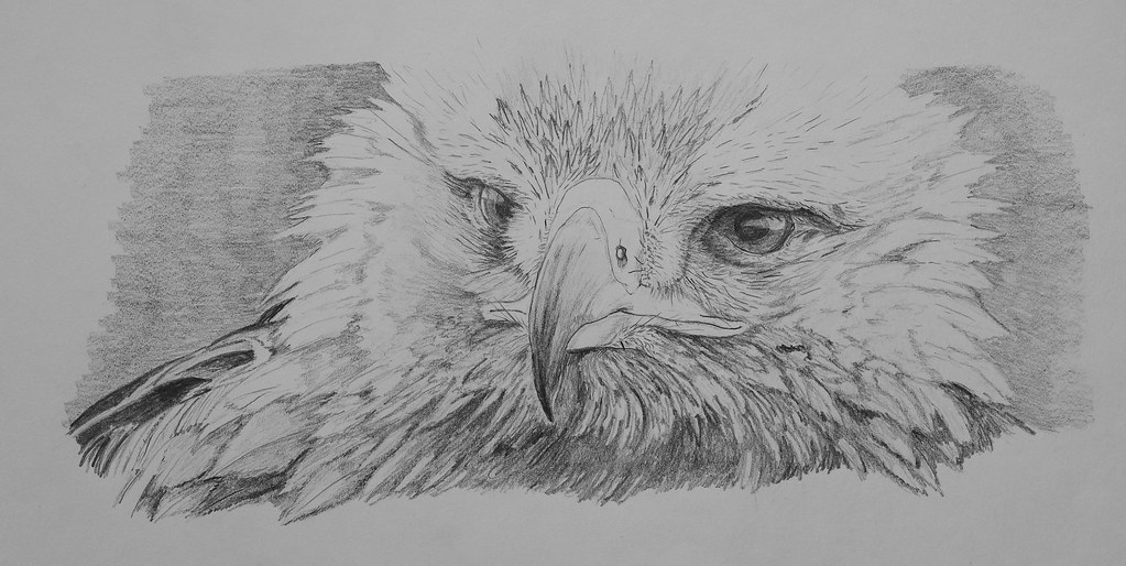 golden eagle drawing golden eagle another drawing from one of my bird of prey eagle golden drawing