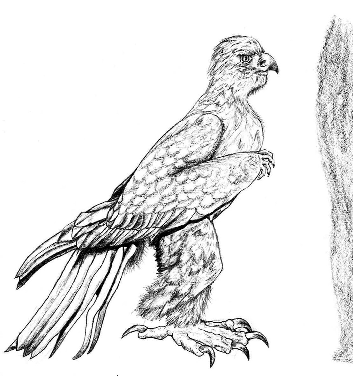 golden eagle drawing golden eagle drawing free download on clipartmag golden drawing eagle